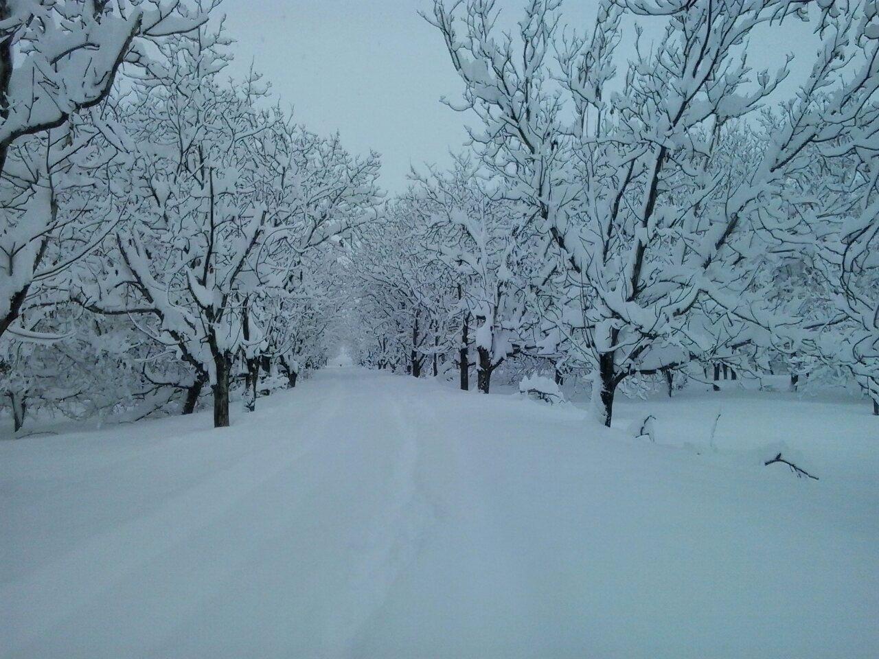 برف ننیز علیا