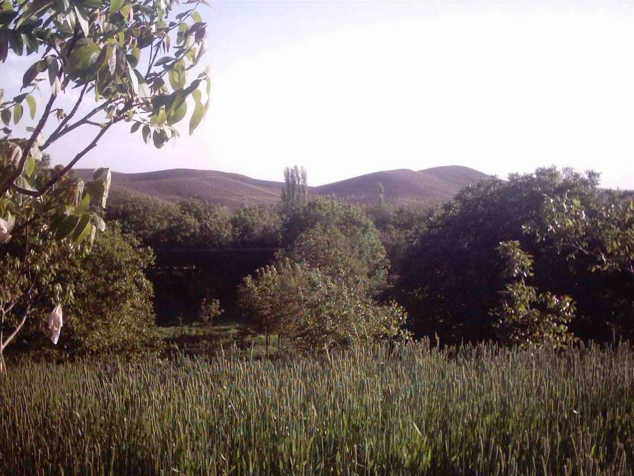 بغله قلیو روستای ننیز علیا