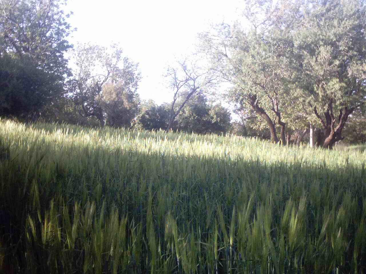 طبیعت روستای ننیز علیا